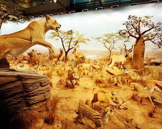 Nep-savanne met opgezette dieren