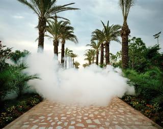 Palmbomen met rook