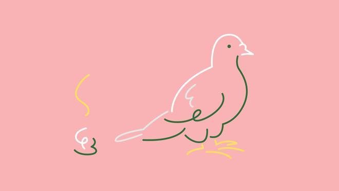 Illustratie van een duif