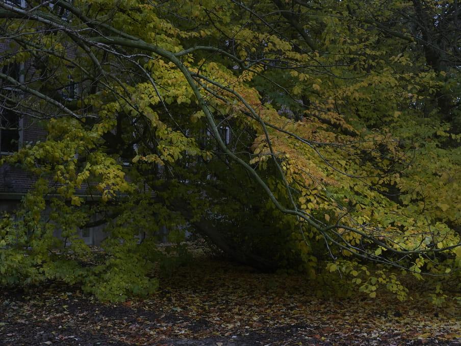 Slaapplek van Ali onder een boom