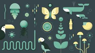 Illustratie van verschillende levenssoorten. Planten, vogels, insecten en zeedieren.