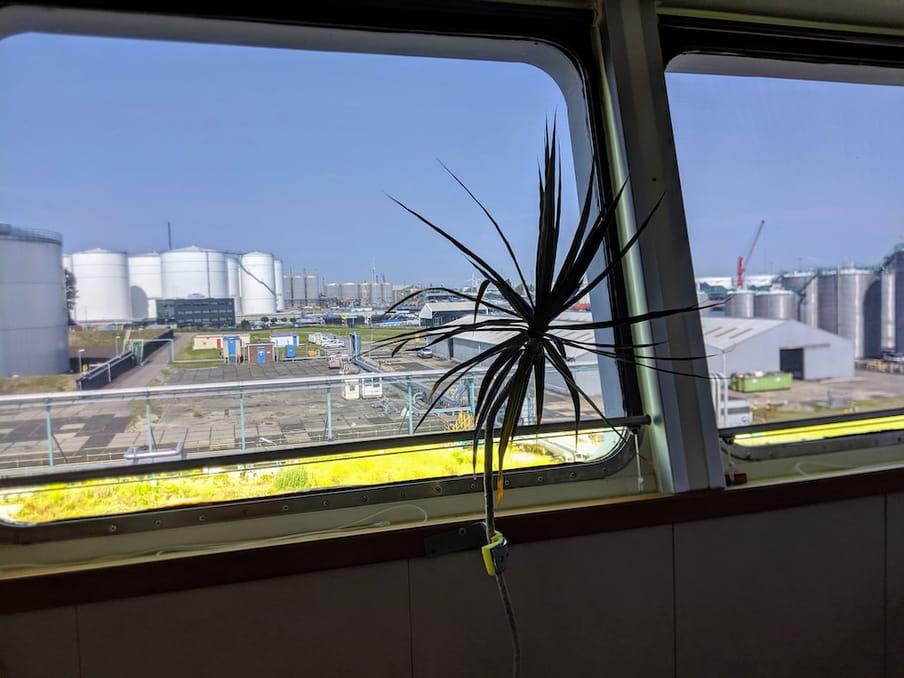 Palmpje aan boord van de Voolwater met zicht op de Vopak-terminal in de Botlek