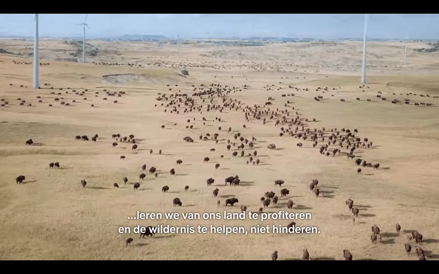 Gnoe's die tussen windmolens grazen op de Serengeti